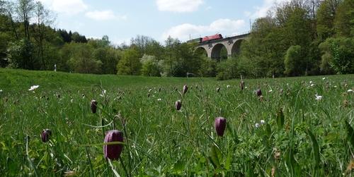 Schachblume Viadukt