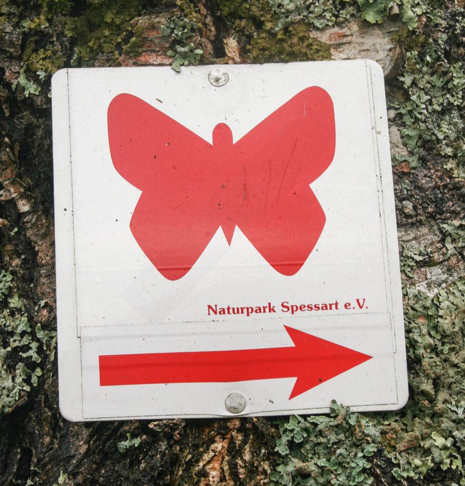 Schmetterling_Emmerichsthal